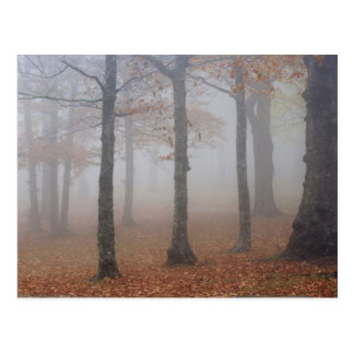 Autumn view of foggy forest, Grandfather Postcard