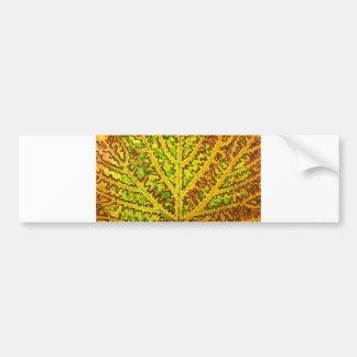 autumn vine leaf texture pattern plant nature orga bumper sticker