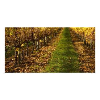 Autumn Vines Photo Card