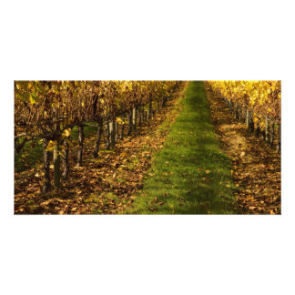 Autumn Vines Photo Card Template