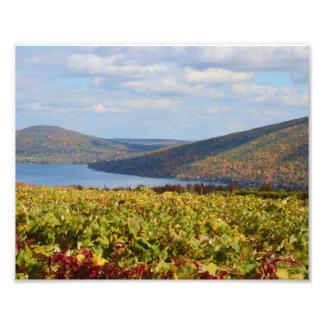 Autumn Vineyard. 1 Photo Art