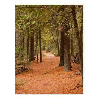 Autumn Walk Post Card