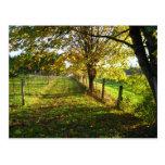 Autumn Walk Postcard