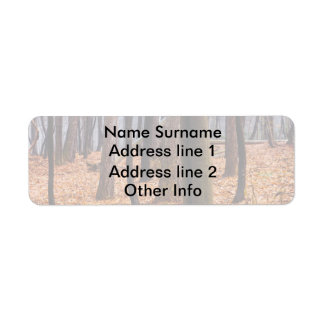 Autumn Woods, Forest Photograph Return Address Label