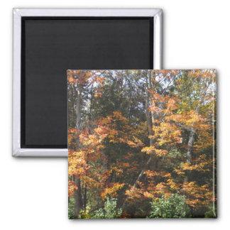 Autumn Woods Square Magnet