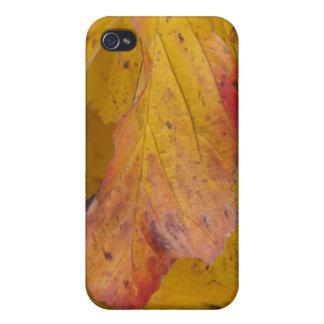 autumn yellow iPhone 4 cases