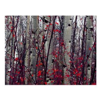 Autumnal Aspens Postcard