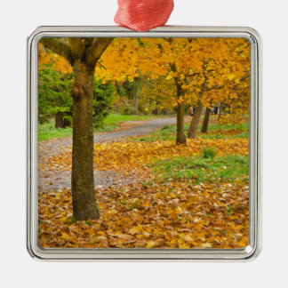 Autumnal leaves in park christmas ornament