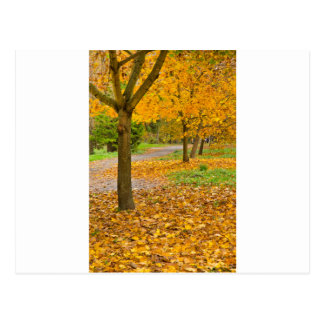 Autumnal leaves in park postcard