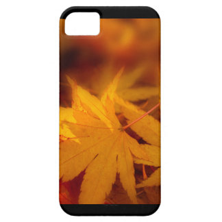 Autumnal serenity. iPhone 5 covers