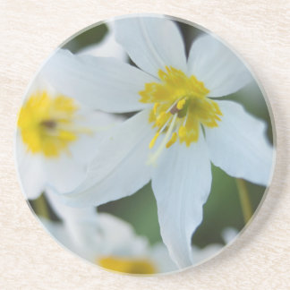 Avalanche Lilies at Paradise Park Beverage Coasters