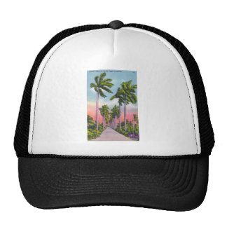 Avenue of Stately Royal Palms in Florida Trucker Hats