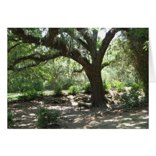 Avery Island moss covered tree Cards