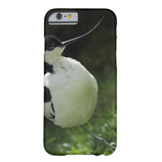 Avocet bird iphone case barely there iPhone 6 case