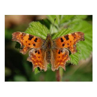 Avon gorge Comma butterfly Postcard