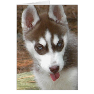 AW- Siberian Husky Birthday Card