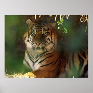 Awakening Tiger Poster