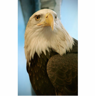 Awesome Dangerous Bald Eagle Watch In Deeply Standing Photo Sculpture