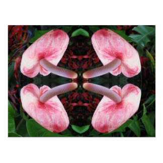 AWESOME Exotic Flower Postcard