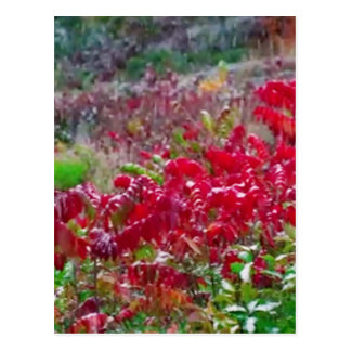 Awesome Fall Red Leaf Flower Colors on gifts fun Postcard