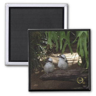 Awesome Kookaburras Square Magnet