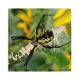 Awesome Photo Orb Spider in Web Wood Coaster