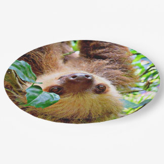 awesome Sloth Paper Plate