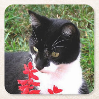 Awesome Tuxedo Cat in Garden Square Paper Coaster