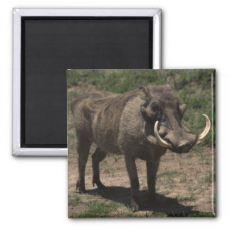 Awesome Warthog Square Magnet