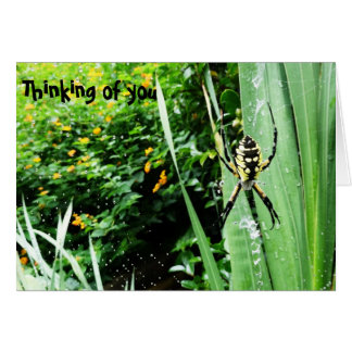 Awesome Yellow and Black Garden Spider Photography Greeting Card