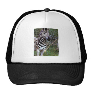 Awesome zebra on hat