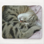 Awkward Cat Sleeping Position Mouse Pads