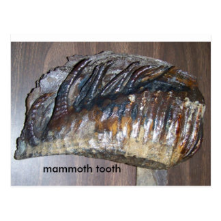 awsome tooth, mammoth tooth postcard