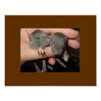 AWWW BABIES RAT POSTER