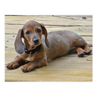 AX- Cute Dachshund Postcards