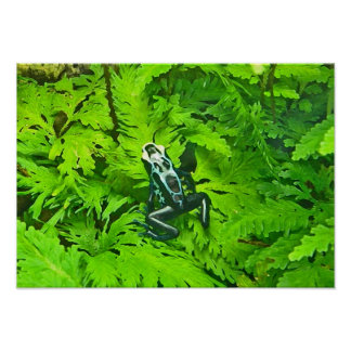 AZ- Tree Frog and Ferns Poster