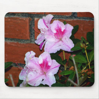Azalea Blooming By A Brick Wall Mouse Pad