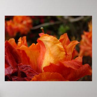 Azalea Flower Art Prints Floral Framed Art Decor Poster