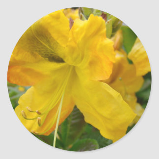 AZALEA FLOWERS 10 Yellow Azaleas Cards Gifts Mugs Stickers