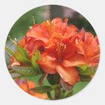 AZALEA FLOWERS 14 Orange Azaleas Cards Gifts Mugs Round Sticker