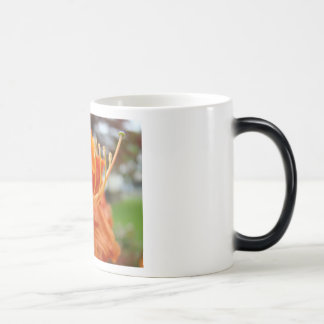 AZALEA FLOWERS 6 Orange Azaleas Cards Gifts Mugs
