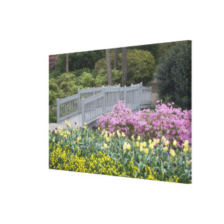 Azalea Heath Family (Ericaceae), Tulip, and Canvas Print