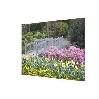 Azalea Heath Family (Ericaceae), Tulip, and Stretched Canvas Print