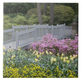 Azalea Heath Family (Ericaceae), Tulip, and Tile