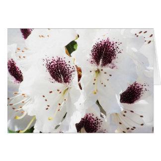 Azaleas card
