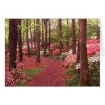 azaleas greeting cards