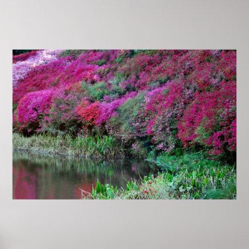 Azaleas in abundance print