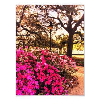 Azaleas In Forsyth Park Photo Print