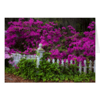 Azaleas in the spring at Historic Isle of Hope Card