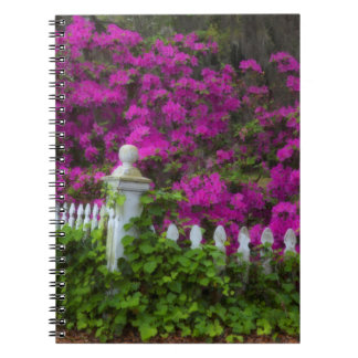 Azaleas in the spring at Historic Isle of Hope Note Books